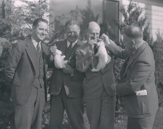 Image of magicians and rabbits