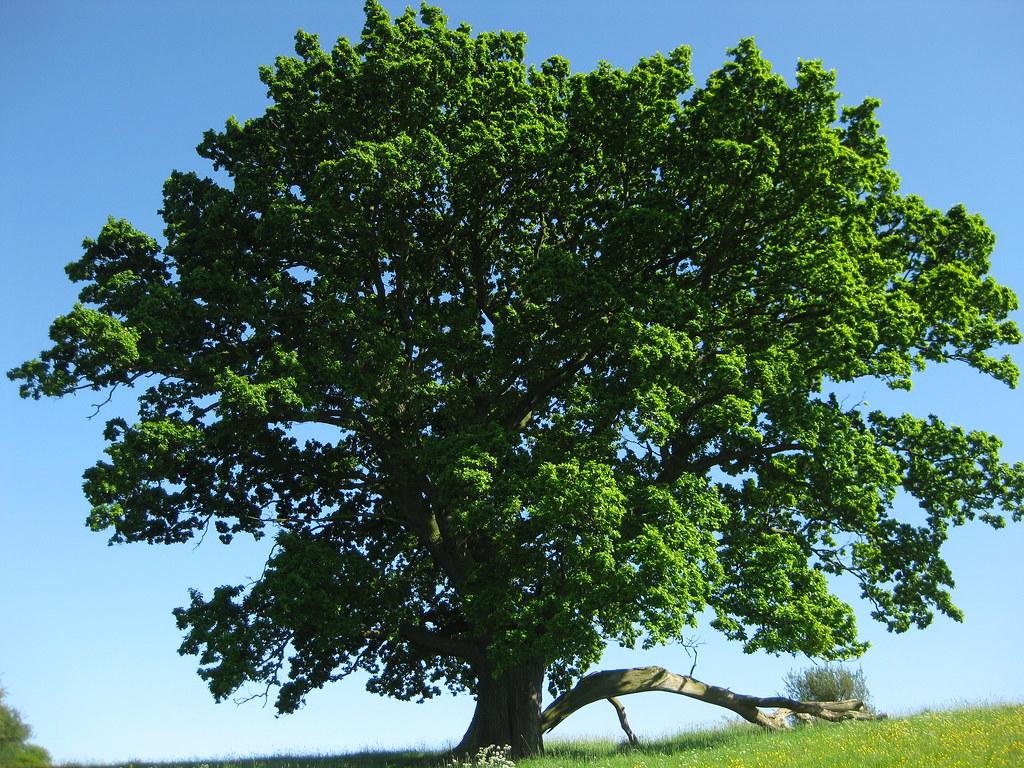 Tree_June2019_WebPage_1024x768