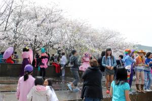 San Francisco Cherry Blossom Festival. Source: Michael Ocampo, Flickr.
