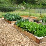 Carrots, beets, cabbage, broccoli, cauliflower, garlic.
