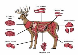 butcheringdeer