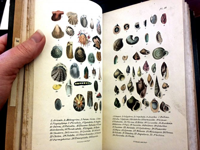 The Conchologist's First Book, 3rd edition, Plates 9 and 10