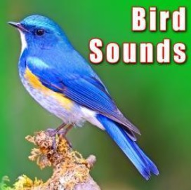 Sound Ideas - Bird Sounds Sound Ideas
