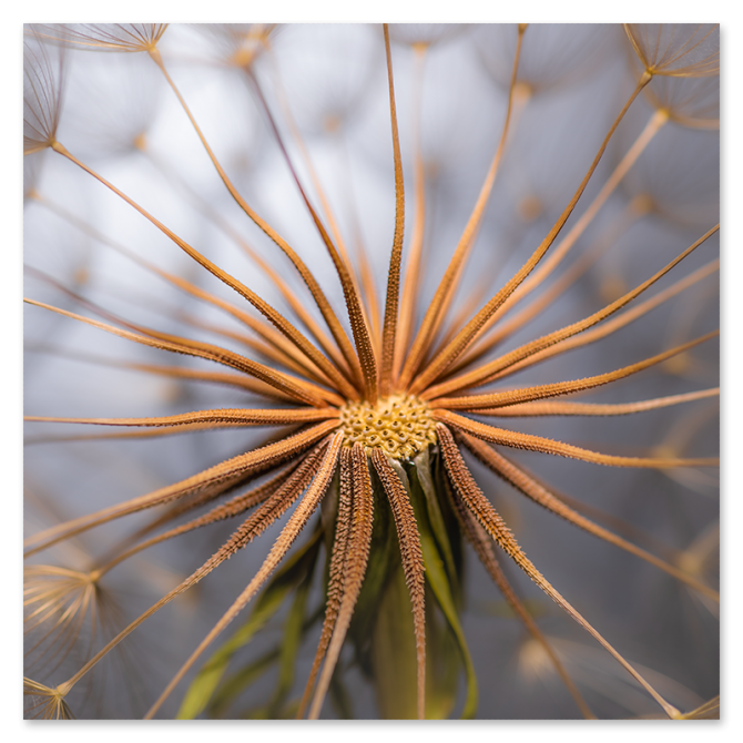 "Denis Frolov, ""Salsify"", Photograph Print, 12""x12"", $30"