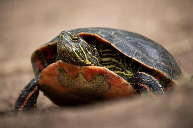 """Lauren Lang, """"Belmar Turtles"""", Photography"""