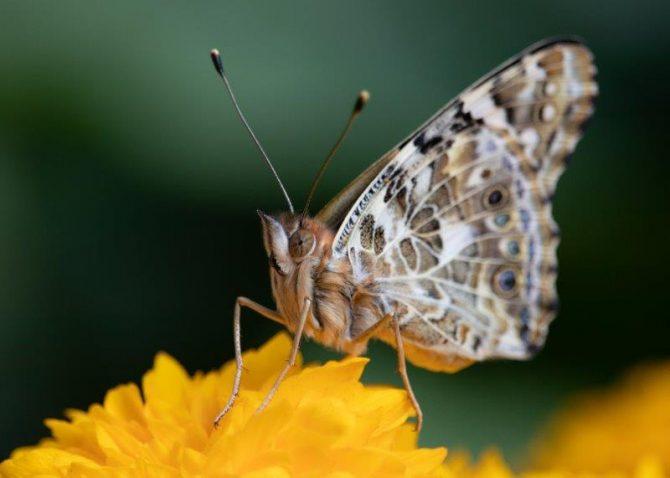 "Lauren Lang, ""Flowers and Butterflies"", Photography"