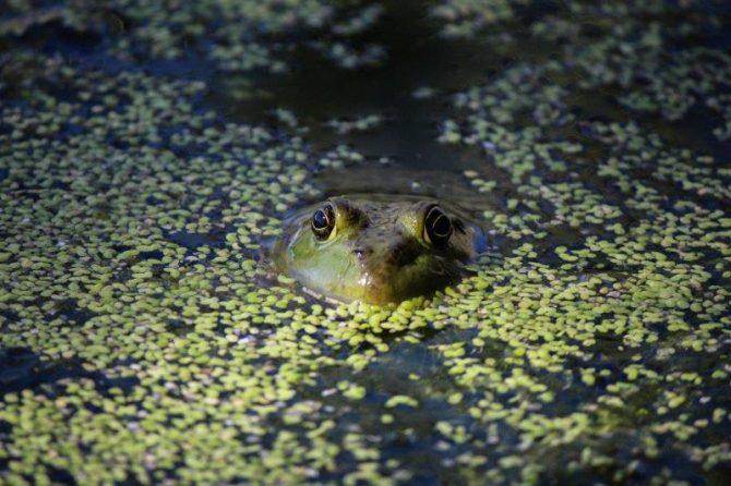 """Lauren Lang, """"Frogs"""", Photography"""