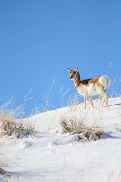 "Lauren Lang, ""Wyoming Trip"", Photography"