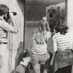 Children interact with a polar bear while a man captures the moment on his camera, undated. Photograph by Bud Bertog. Source: Special Collections, Chicago Park District Records: Photographs, Photo 167_011_018.