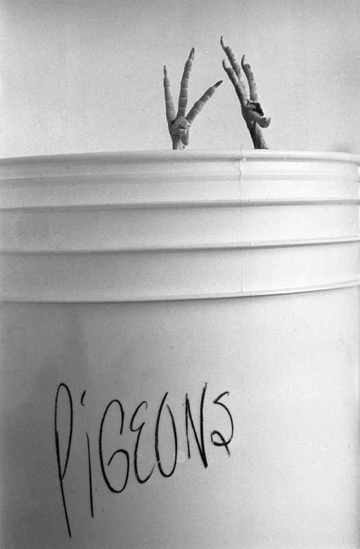 Bucket with pigeon feet sticking out of the top