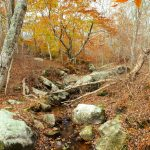 Autumn view of the lower stretches of Fulling Mill Brook, Land Bank property