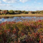 Small pond behind the beach at Spring Point with fall foliage