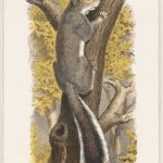 Print of a grey squirrel