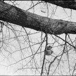 Photo of a squirrel climbing up a branch