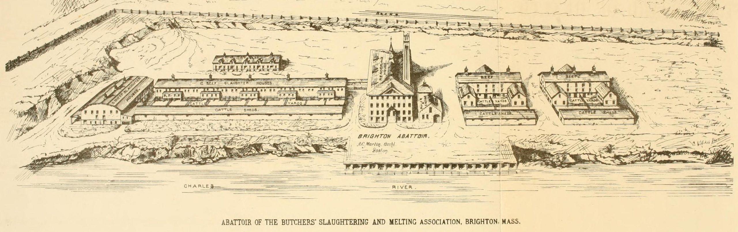 The Brighton abattoir complex