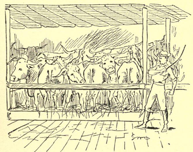 Shipboard 'cattle' pen
