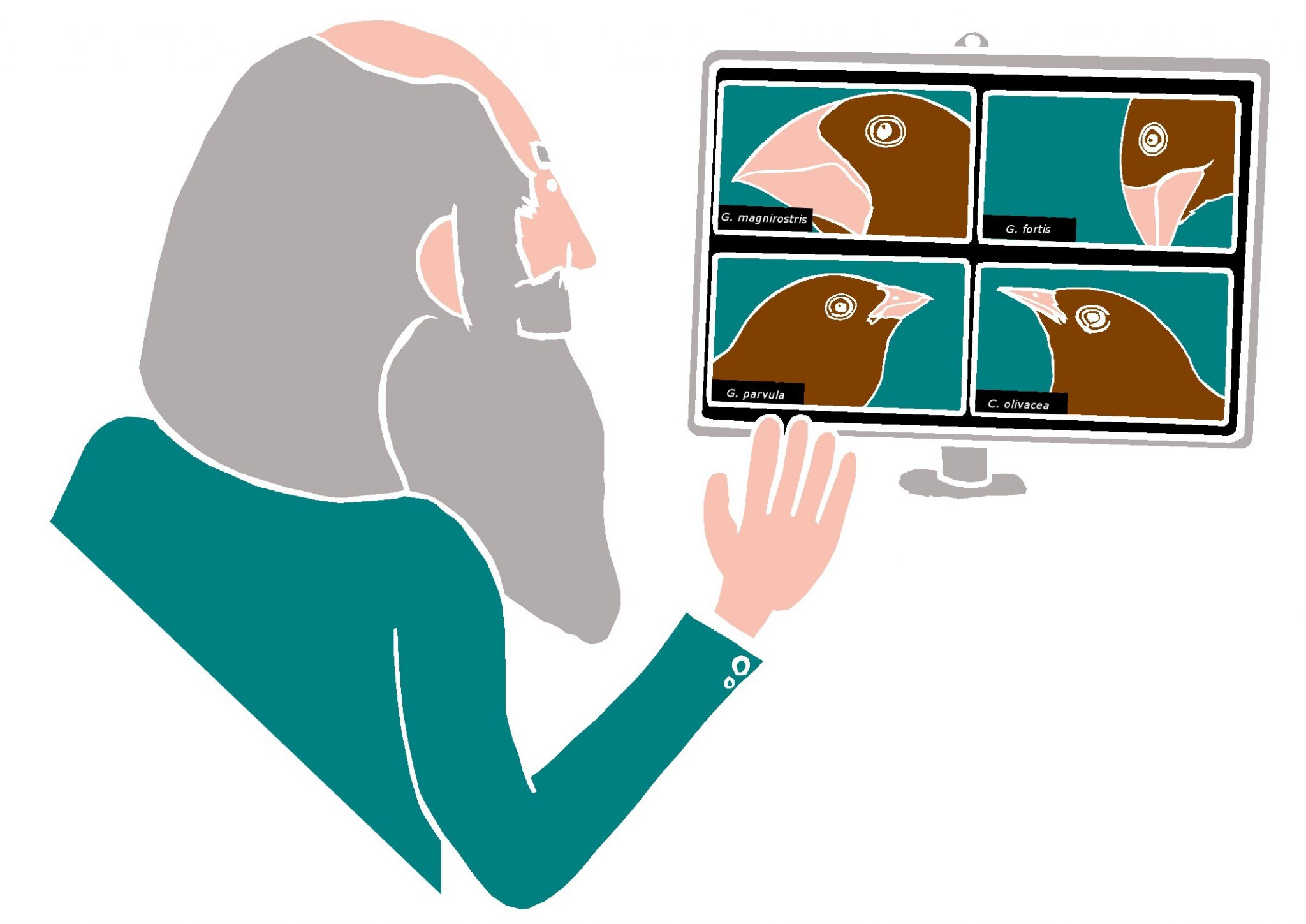 illustration of Charles Darwin Zooming with four finches