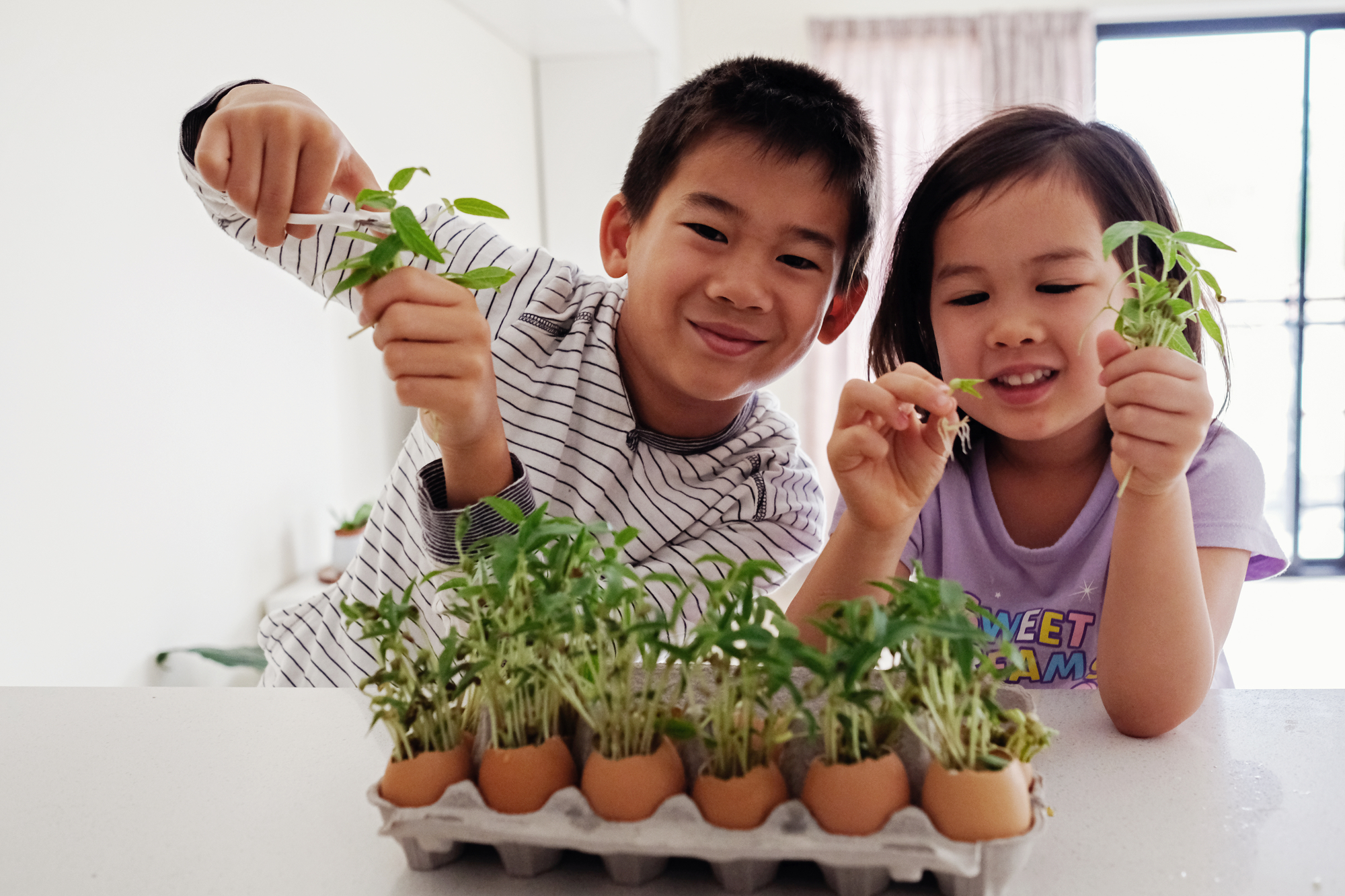 Mixed Asian children holding seedling in eggshells,, eco gardening, montessori, education , reuse concept