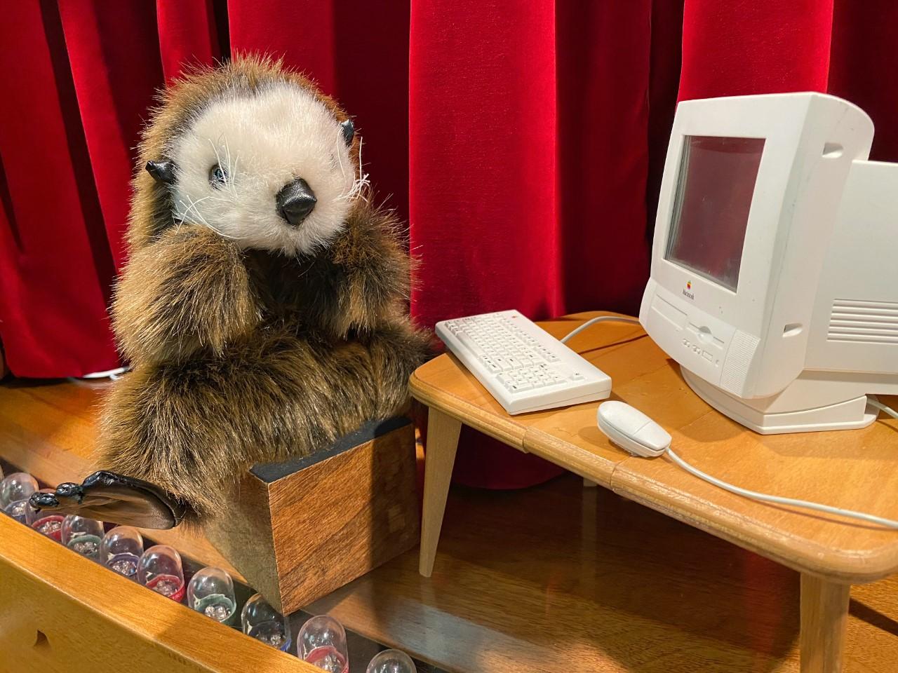 survey-otter