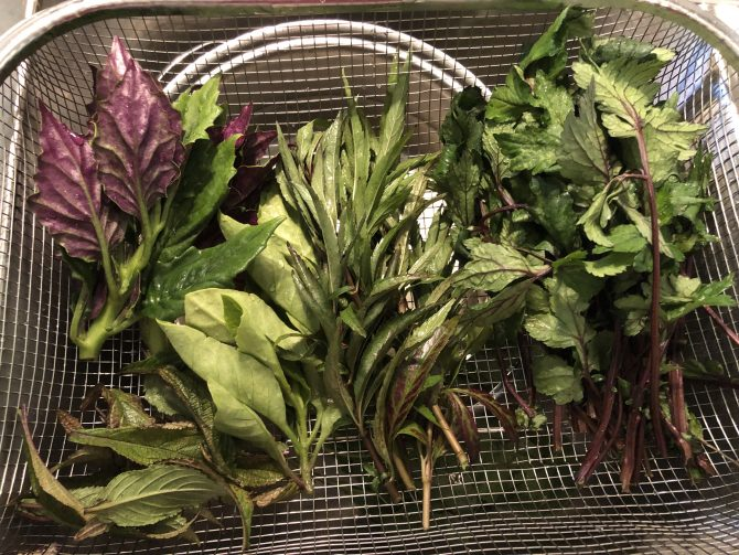May Lee's organic herbs for traditional Hmong chicken soup.