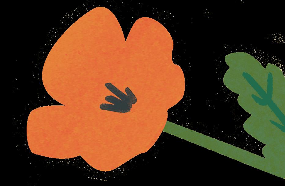 cropped-poppy