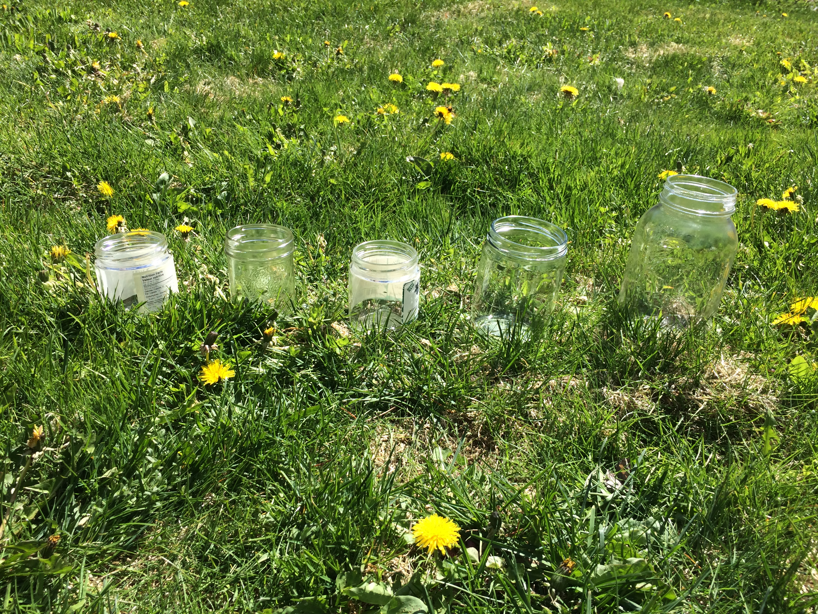 empty glass jars laid out on grass