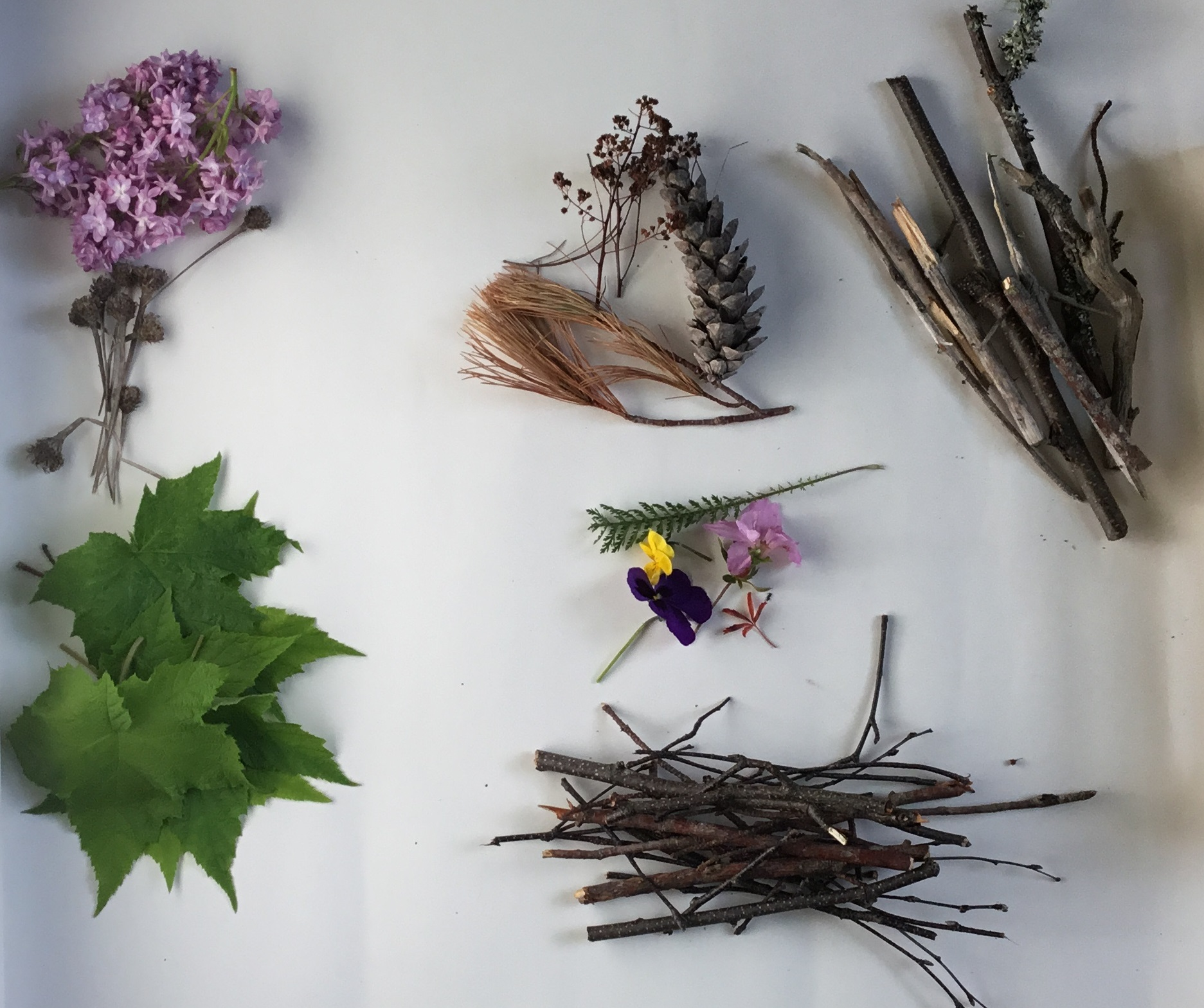 flowers, leaves, and sticks