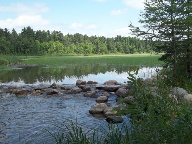 Image is of clear river water with small boulders and evergreen trees at the headwaters of the Mississippi River at Lake Itaska in Minnesota