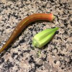 okra seed pods
