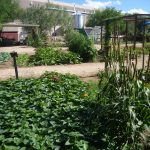 Community Food Bank Learning Garden