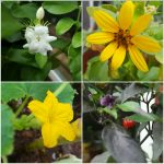 collage of four pictures of flowers