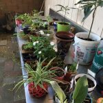 many different kinds of plants in a variety of pots on a metal table