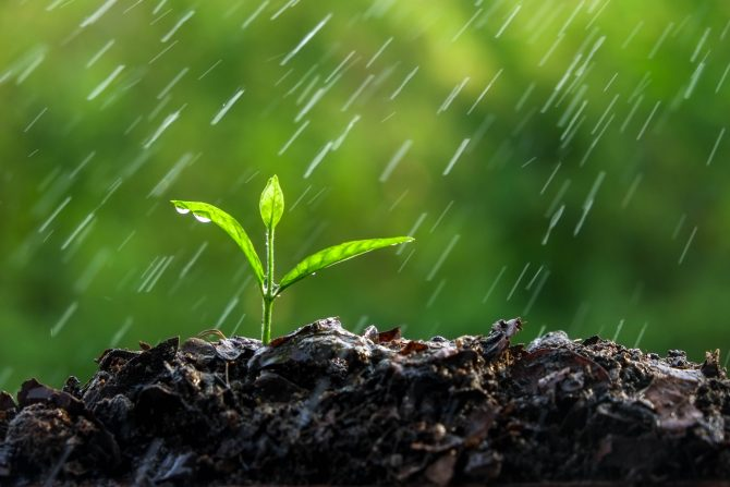 Plant Your Monsoon Garden Pima County Public Library