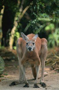 Kangaroo Questions & Answers | Central Rappahannock Regional