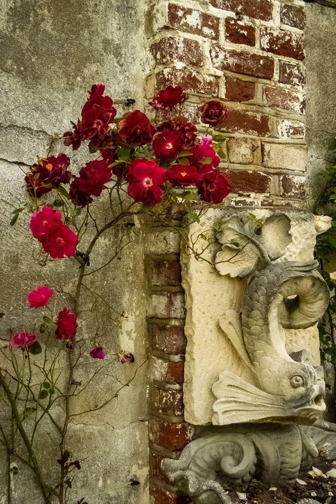 Chatham Rose Wall Study