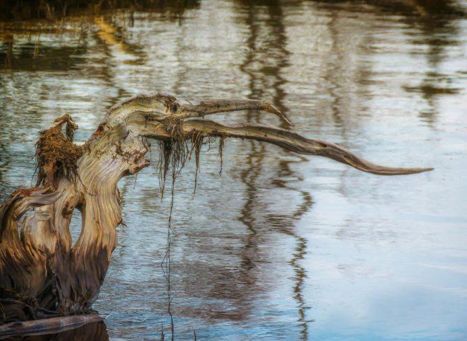 Driftwood Bird, Widewater