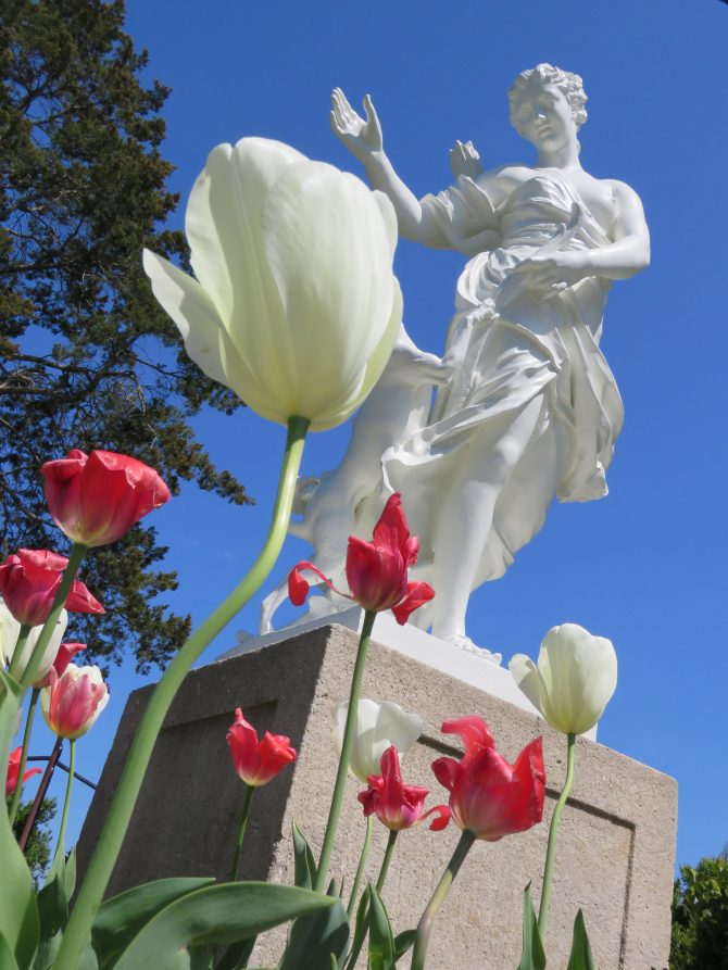 Diana and Tulips, Chatham