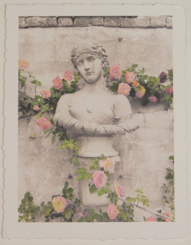 Chatham Roses