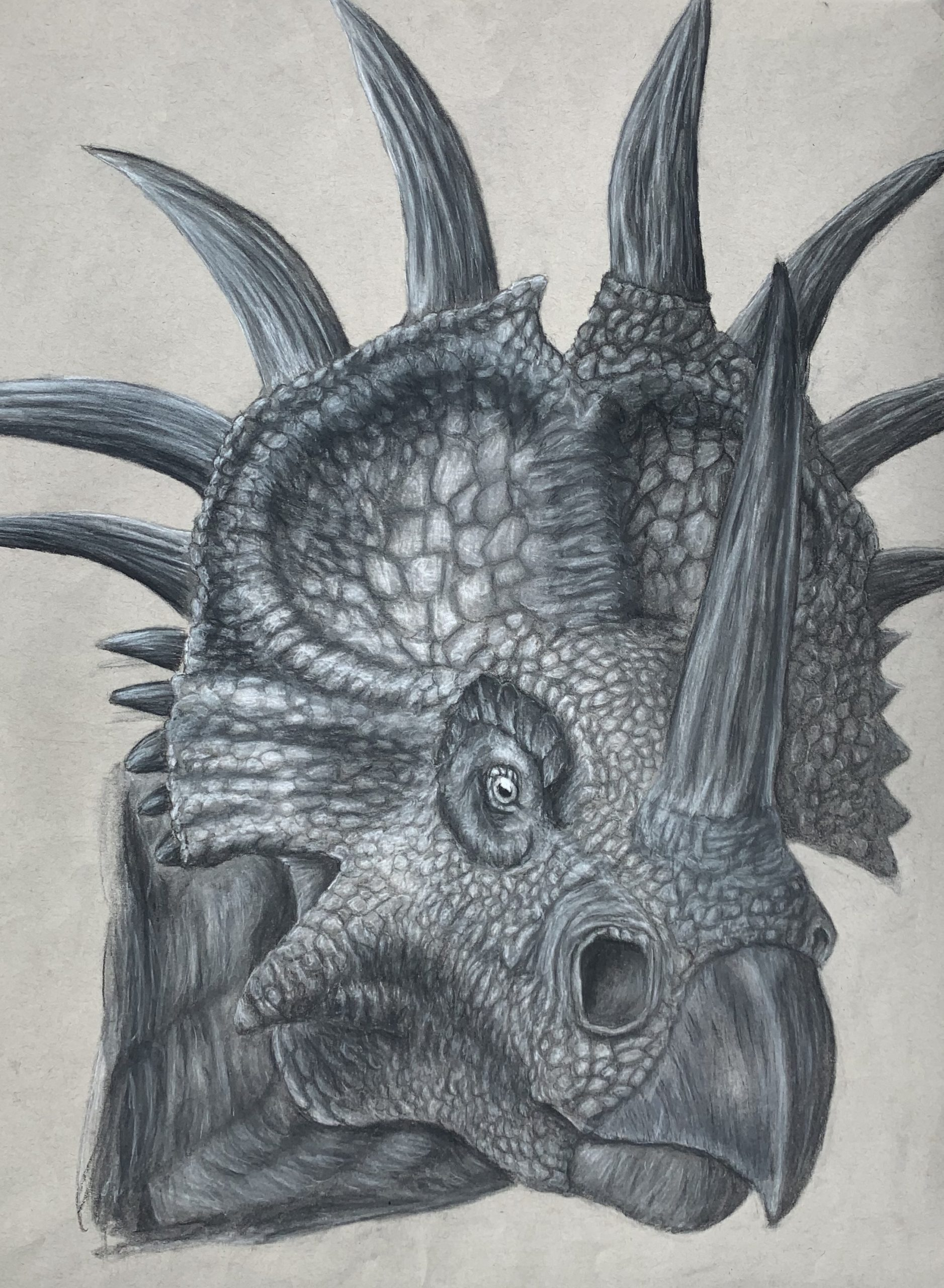 """3rd Place, Grades 11-12, """"Dinosaur"""" by Madison Charles, Charcoal"""