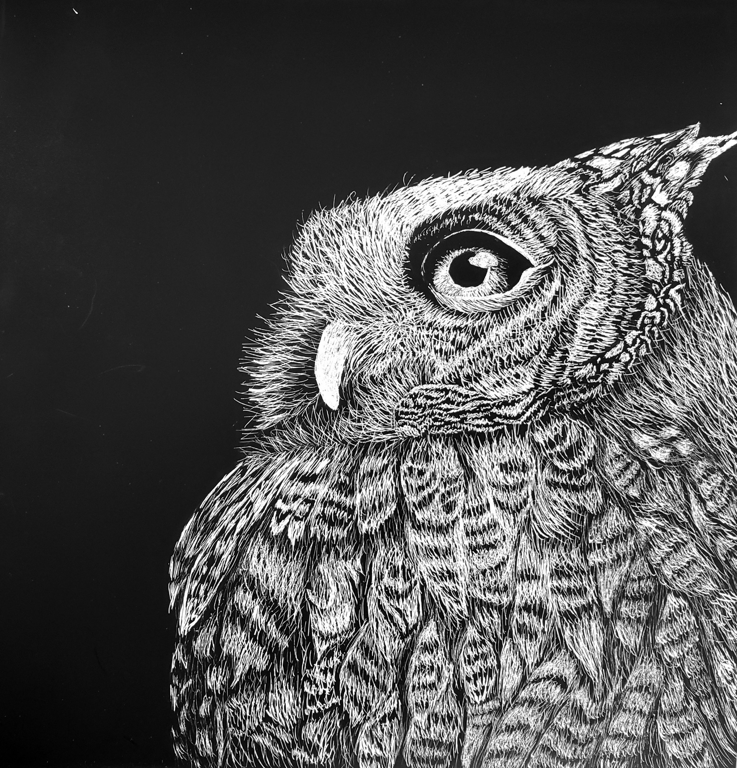 "Grades 9-10, ""The Owl"", Kaylee Meier"