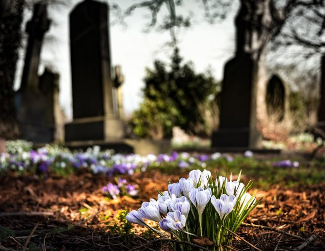 <p>graveyard, church, crocus, cemetary</p>