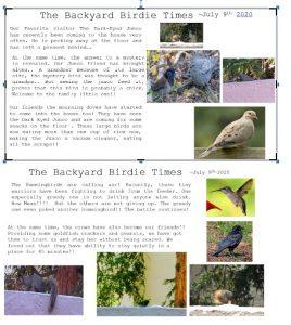 The Backyard Birdie Time