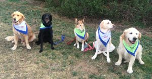 Doggy Tales FirstMeetingApril 2015 DV
