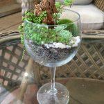 Terrarium in a Wine Glass