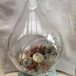 Terrarium in a Bottle