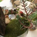 Terrarium with Ladybugs