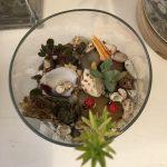 Terrarium in a Bowl